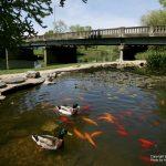 Bridgewater_05